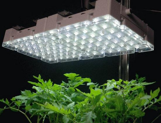 indoor led growing