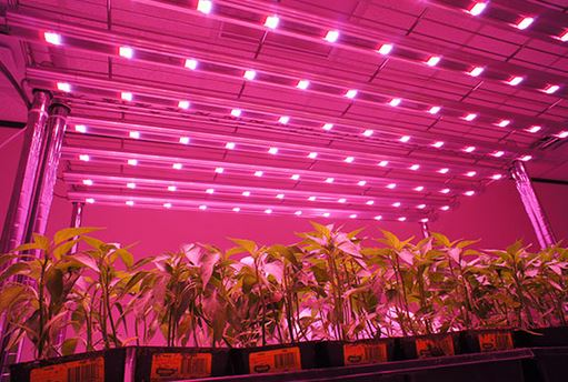 Current Top Rated Led Grow Lights