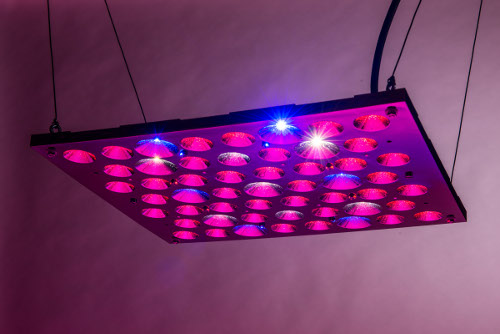 Bonsai Hero 150 Watt Led Grow Light Panel Review