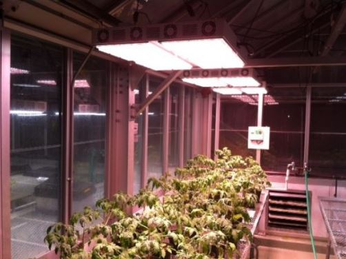 Apache Tech At600 White And Red Led Grow Light Review