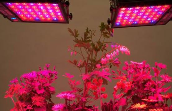 growing with led