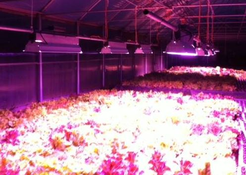 total grow greenhouse