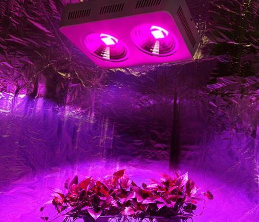 RoleadRo COB LED Grow Light Review