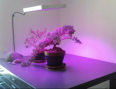 Erligpowht 45W LED Grow Light
