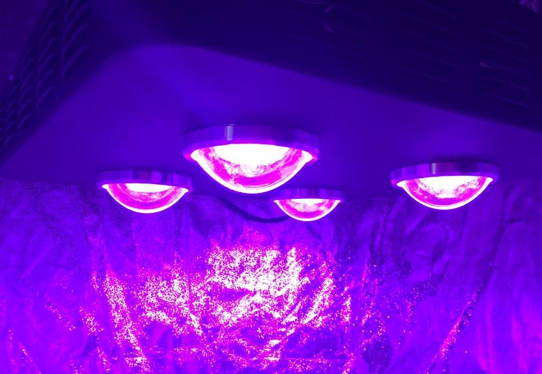 Growthstar Spider 4x 200w Mcob Led Grow Light Review